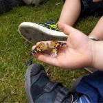 Butterfly release at The Priory
