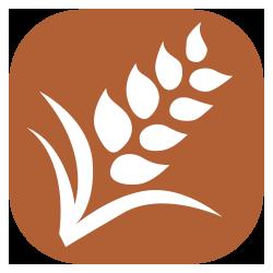 Cereals Containing Gluten