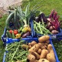 Homegrown vegetable harvest